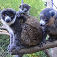pj-party-christmas-eve2_-photo-courtesy-of-the-sacramento-zoo