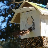 primary-Birdmania--Build-your-knowledge-and-your-bird-feeder-1486488907
