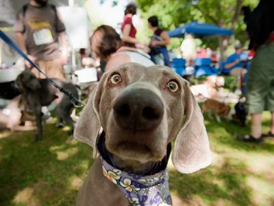 doggy-dash-and-bark-at-the-park-festival_-photo-by-stella-sweet-photography