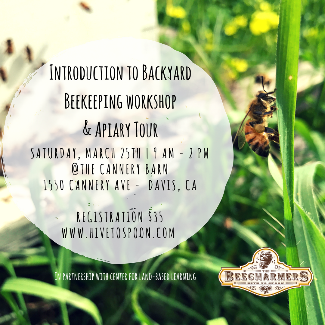 intro to backyard beekeeping workshop u0026 apiary tour presented by
