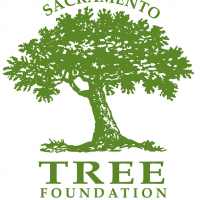 Caring For Your Mature Tree Workshop