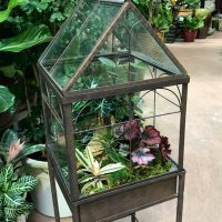 Exotic Plants Year-End Clearance and Auction