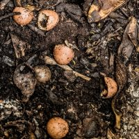 UCCE Master Gardeners of Sacramento County Worm Composting Workshop