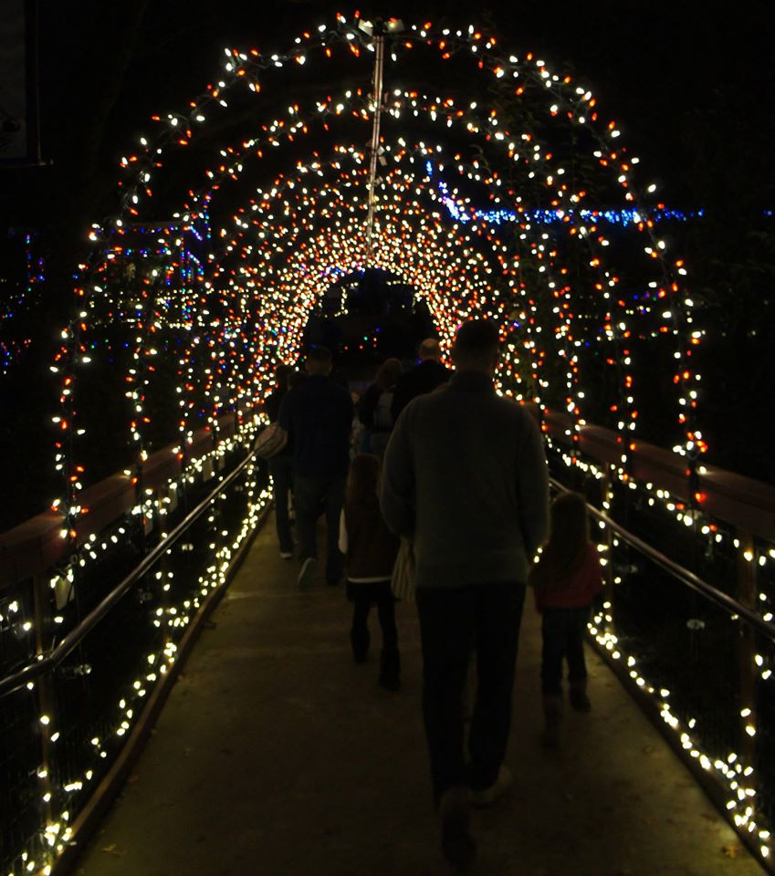 Wild Nights and Holiday Lights presented by Folsom City Zoo Sanctuary | Community | Sacramento365  sc 1 st  Sacramento365 & Wild Nights and Holiday Lights presented by Folsom City Zoo ... azcodes.com