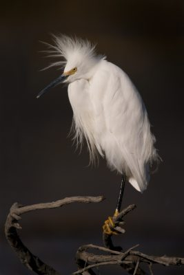 Photographing the Natural World (Photography Month Sacramento)
