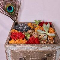 Succulent Terrarium with a Peacock Feather Plant N...