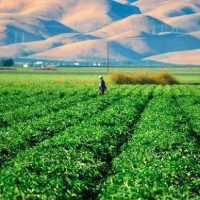 Food for Thought: How Immigration is Impacting California's Food