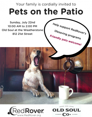 Pets on the Patio