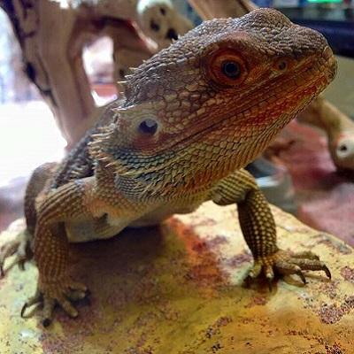21st Annual Sacramento Reptile Show