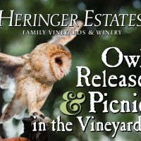 Owl Release and Picnic
