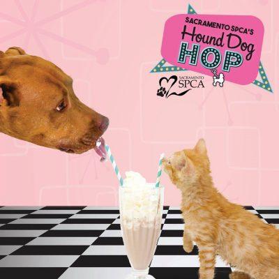 Sacramento SPCA's Hound Dog Hop