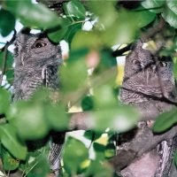 Wildlife Care Association Owl Release