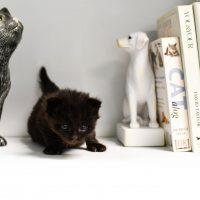Sacramento SPCA's Fall Book Sale