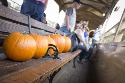 Pumpkin Train
