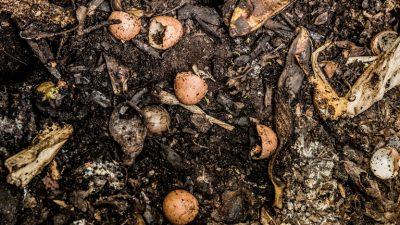 Worm Composting Workshops