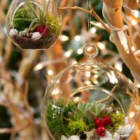 Ugly Sweater Swig and Dig: Live Plant Ornaments