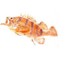 Nature Printing with Fish: Gyotaku Workshop