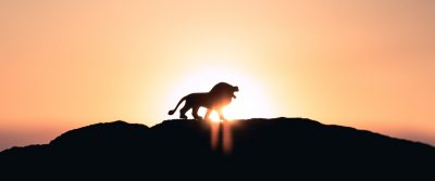 Lion King Summer Camp