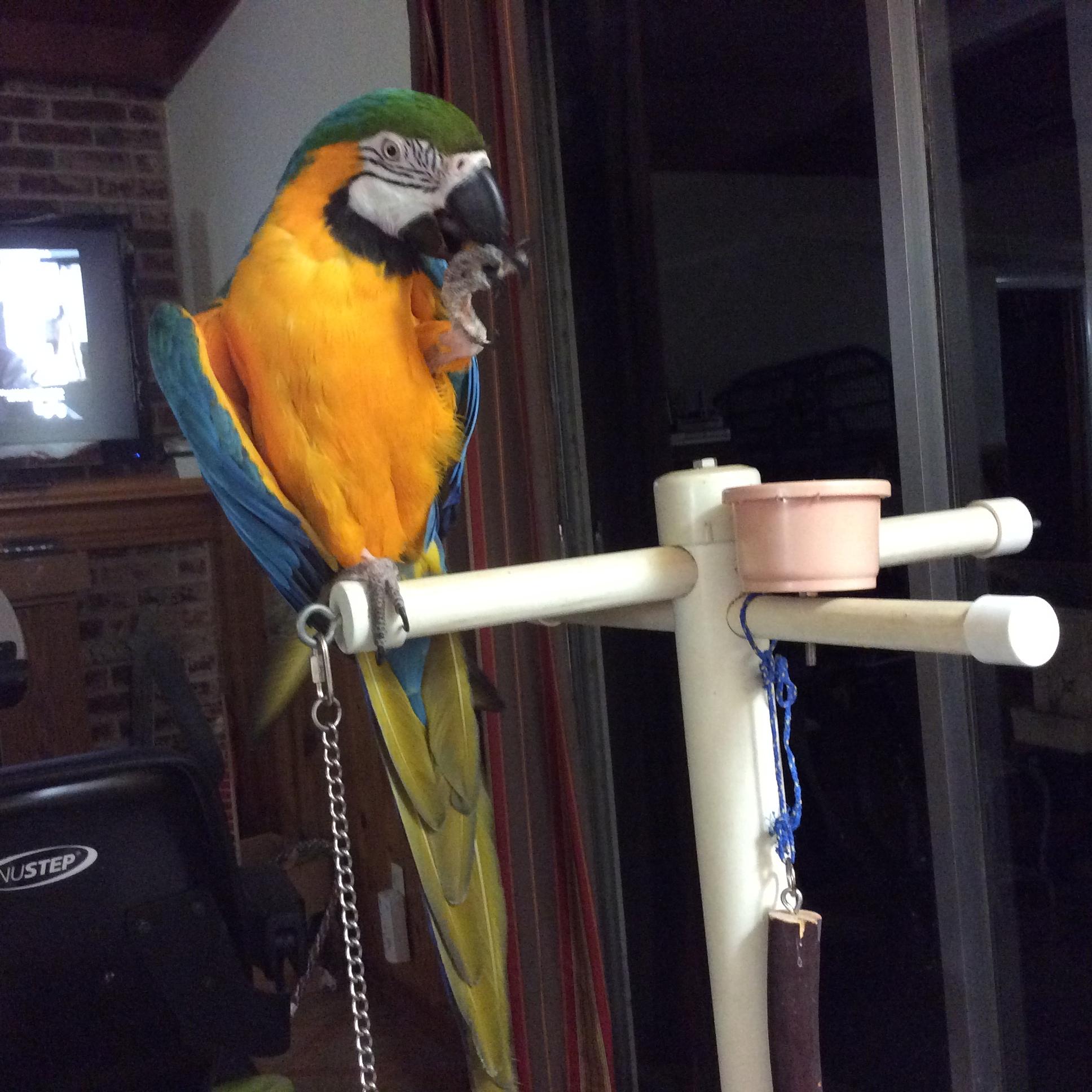 Pet Bird Adoption Fair and Basic Bird Care Class presented