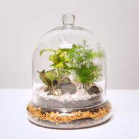 Swig and Dig: Tropical Cloche Terrarium