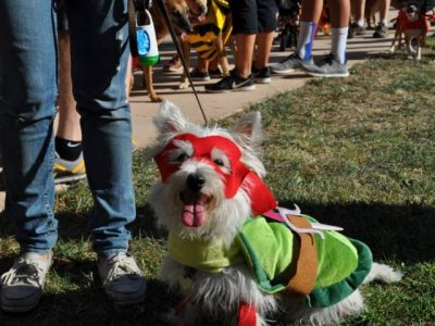 Halloween Festival and Pooch Parade
