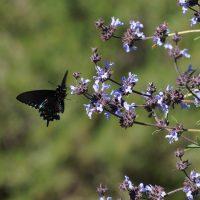UC Davis Arboretum Clearance Plant Sale