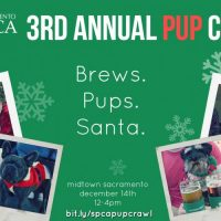 Jingle Bell Pup Crawl