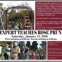 Rose Pruning Workshops