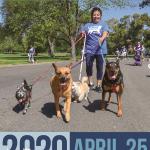 Sacramento SPCA Doggy Dash