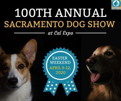 Sacramento Dog Show Cancelled Presented By Sacramento Kennel