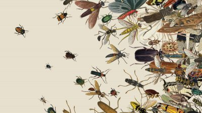 Insects and Invertebrates Day
