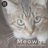 Meowga: Cats and Yoga