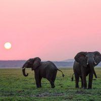Safari Adventure Summer Art Program