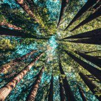 Into the Woods Summer Art Program