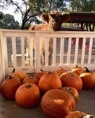 Halloween Fun at Fairytale Town