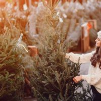 Foothills Christmas Trees at Cal Expo