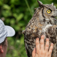 Exploring Wildlife for Girls