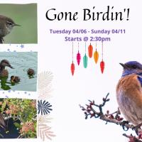 Gone Birdin'
