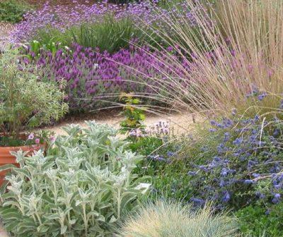 Landscape Redesign: An Environmentally-Friendly Ap...