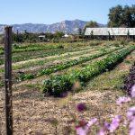 Farm Tours at Park Winters