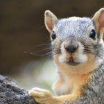 Little Mammals at the Koobs Nature Area