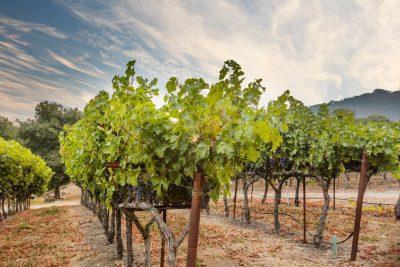 Rombauer Vineyards Sierra Foothills