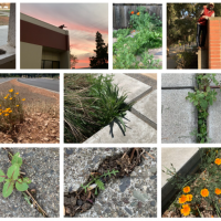 Native Plant Gardening and The Seed Pile Project