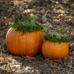 Family Pumpkin Planter Class
