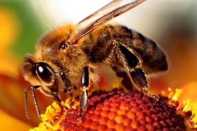 Sacramento Area Beekeeping Association